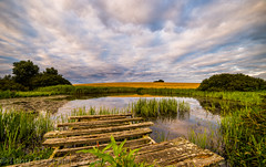 Golden Pond. (Tony Brierton) Tags: 30716 cowexford curracloe pond