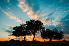 Coronando el ocaso (Giacomo della Sera) Tags: landscape paisaje tree arbol sunset atardecer naranja blue orange azul espaa spain