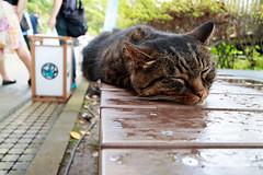 IMG_1346 (Jun.Ohashi) Tags: animal cat enoshima    canon  eos eosm3 apsc efm1122mmf456isstm efm1122mm 1122mm efm f456 is stm