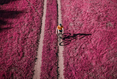 Oz (ewitsoe) Tags: ir infrared images pink grass bikerider ride bicycle summer poland poznan rideon ewitsoe nikond80 fromabove lookingdown exercise trail colorful