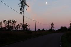 Moon in morning light (evisdotter) Tags: morning light landscape trees road moon sooc nature sky colors mckel land silhouetts