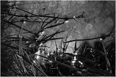 (J!bz) Tags: water eau agua abstrait abstract abstracto black noir negro blanc white blanco grey gris mono monochrome reflet reflect reflejo reflexo herbe hierba monte pattern motifs nature naturaleza closeup jbr photo jbrphotography light luz lumiere ombre shadows