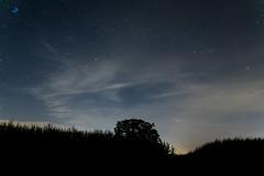 Pleiades and a tree (maximalzdnb) Tags: stars starry night tree pleiades 1750 sigma f28
