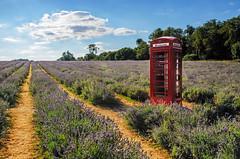 Mayfield Lavender Fields Phonebox (KVH-P) Tags: 2016 phonebox lavender clouds d7000 gitzotripod nikond7000 uklandscape leefilters landscape nikon surrey mayfieldlavenderfields
