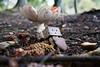 40 winks (Ed Swift) Tags: nationalfungusday danbo 2470f4lis fungi revoltech 7d2 mushroom danboard canon