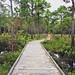 Carolina Beach State Park in North Carolina