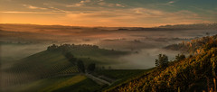 In the magic valley (rinogas) Tags: italy piemonte cuneo langhe novello unesco rinogas