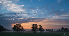 A glorious start of the day (Marc.van.Veen) Tags: tree trees fog haze mist sunrise start day daylight sun dawn outdoor marcvanveen nature naturephotography grass field sky clouds