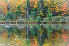 Symmetry  In Colour (maureen.elliott) Tags: reflections lake water trees fall autumn nature colours outdoors michigan upperpeninsulaofmichigan symmetry