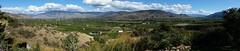 Okanagan vista - vineyards (D70) Tags: okanagan vista vineyards oliver bc canada summer grapes panorama