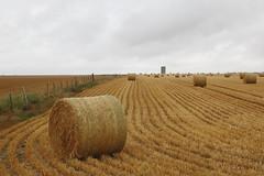 Hay bale (Go Go Janet) Tags: harvest haybale pattern bales bundles round farm