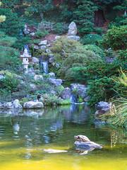 King of the Pond (nexotal) Tags: turtle pond koi hakone japanese garden saratoga california waterfall