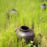 water vases thumbnail