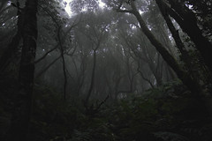 SAM_8974 (Al Glez) Tags: tumblr pint forest tenerife laurisilva dark scary foggy fog
