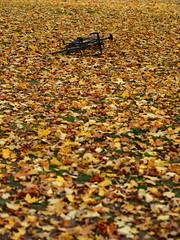 2016 Bike 180: Day 252, October 18 (olmofin) Tags: 2016bike180 finland helsinki tlnlahti bicycle leaves fall autumn colors mzuiko 45mm f18 polkupyr lehdet ruska syksy