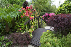 Bridge amongst the colours of late spring (Four Seasons Garden) Tags: four seasons garden uk england west midlands walsall spring 2016 japanese maples acers leaves azalea flowers golden bamboo culms gunerra manicata