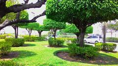 A sombra do meio-dia (José Argemiro) Tags: praça sombra verde meiodia solapino noon midday noonday noontide noontime shadow green garden square tree noondaysun wood grove arvoredo bosque biodiversidade botânica botany biodiversity
