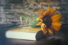 relaxed time (evibaumann) Tags: sonnenblume sunflower buch vintage retro fujixt10