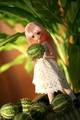 Chi found a strange melon (Mimiru Kamachi) Tags: chi mimirukamachi canon azone picconeemo canoneos5d canonef100mmf28lmacroisusm