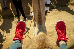 Maralal Camel Derby (20 of 93) (weldonwk) Tags: kenya camel deby maralal
