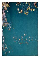 DSC_0276 (mia_alexiou) Tags: autumn leaves colours river water blue red yellow tree zagori nature ioannina