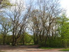 20130505_173618 (MelisaTG) Tags: cameraphone trees woods urbanwoods greenleafs