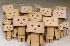 You Might Find Yourself With One Too Many Danbos (Arielle.Nadel) Tags: cardboard toomany yotsuba danbo toyphotography revoltech danbos danboard cardbo minidanboard minidanbo canon5dmarkiii bunnyrel ariellenadelphotography