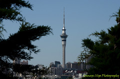 Sky Tower (Camera Clips) Tags: city sky water yachts masts harbourbridge carts ponsonby westhaven aucklandcity westhavenmarina