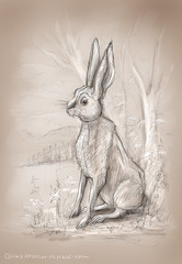 The Hare (Hazel Mitchell Illustration) Tags: rabbit sketch hare sketching potter beatrix childrensbooks childrensillustration hazelmitchell