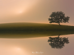 El lago mgico (Mimadeo) Tags: tree lonely fog solitary dreamy foggy misty mist nature landscape morning trunk light lake water solitude tranquility sunlight magic sun grass fantasy fairy ethereal magical mystical reflection shore background sky sunrise mirror color sunset beautiful outdoor evening beauty wallpaper calm symmetrical symmetry