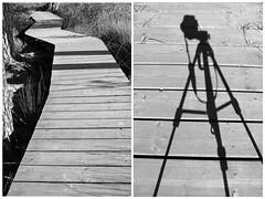 Boardwalk Black & White. (BIKEPILOT) Tags: thursleycommon nature flora trees nationalnaturereserve nnr sightofspecialscientificinterest sssi thursley surrey uk greatbritain bw blackwhite monochrome photoshopped photoshop heathland boardwalk shadows silhouette tripod camera diptych