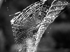 spiders web-8210100 (E.........'s Diary) Tags: spider web water droplet eddie rossolympusomdem5markiiscotlandaugust2016newbu rossolympusomdem5markiiscotlandaugust2016newburghfifescotland