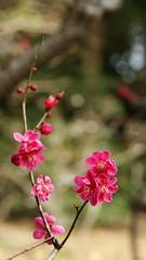 DSC00878 (manabu g) Tags: 350         2012 spring