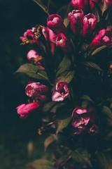 Mum's Garden 3 (katarzynaadamczyk) Tags: flower garden spring vintage canon canon550d sigma sigma1750 colours