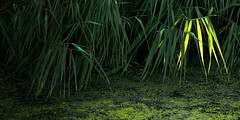 dare to be different (tvdijk19) Tags: flevoland fuji xt1 green nature colors water grass reed netherlands different