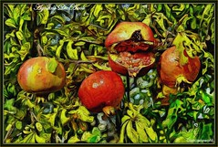 4 melograni - Settembre-2016 (agostinodascoli) Tags: melograni impressionismo art digitalart digitalpainting photopainting agostinodascoli frutti piante nature texture photoshop colore fullcolor nikon nikkor cianciana sicilia nikonclubit