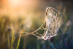 Morning impressions (xkolba) Tags: spider web spiderweb nature plant bokeh outdoor pentacon 50mm f18 autumn pentacon50mmf18 m42 sunrise depthoffield