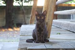 Today's Cat@2016-08-22 (masatsu) Tags: cat catspotting thebiggestgroupwithonlycats pentax mx1