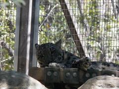 Nice Kitty (Trixter13) Tags: zoo exhibits animals fun hottoday california