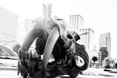 (AAcerbo) Tags: sanfrancisco embarcadero waterfront pier city california blackandwhite bw highcontrast bright sabertooth teeth skull