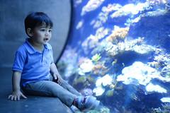 Finding Dory (DodogoeSLR) Tags: dory nemo california academy science cas fish tank aquarium brandon nikon nikkor 50mmf14 bokeh dof love