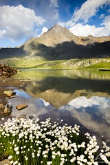 White Bouquet (Andrea Moraschetti Photography) Tags: ngc nature landscape canon italy italian mountain sun sunny clouds sky water lake reflection top summit peak flowers white summer