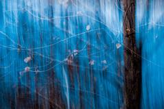 PHOTO D'HIVER (zventure,) Tags: bleu bordsduvar buissons bois alpesmaritimes abstrait aube arbre abstract couleurs extrieur fil flou fort fleuve feuilles flore fleuvecotier france hautelumire hiver