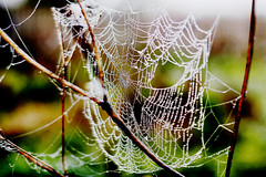woven with pearls (Nadya Kovaleva) Tags: woven autumn foggy fog spiderweb wood forest morning