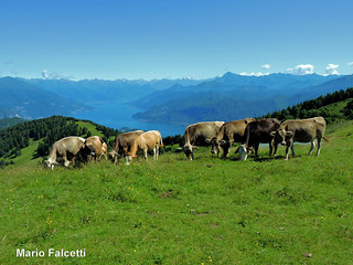 Italy: Como Lake, from Monte San Primo
