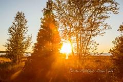 20160828-IMG_7748-WM (Pamela McLellan Zmija) Tags: pamelamclellanzmija saugeenshores portelgin sunset beach lakehuron goblesgrove sunshine