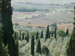 Blick ins Val d'Orcia (1elf12) Tags: toskana italien italy tuscany valdorcia bäume zypressen trees grün green