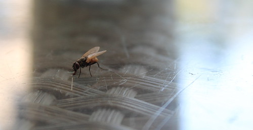 La mouche qui mange