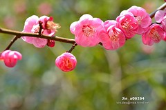 Jin_a06264 (Chen Liang Dao  hyperphoto) Tags:                vacation
