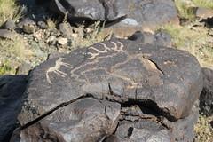 Khavtsagait - Petroglyphs (plutogno) Tags: petroglyph mongolia gobi desert rock carving deer